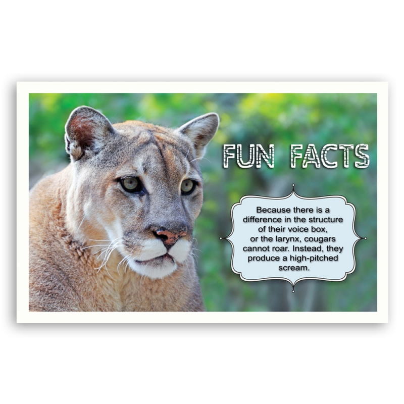 Fun Facts Postcard Set
