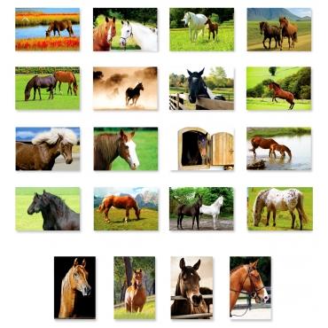 Horses Set of 20