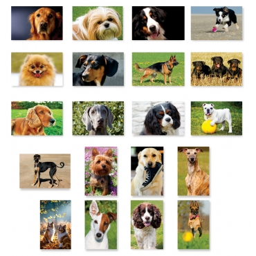 Dogs Set of 20