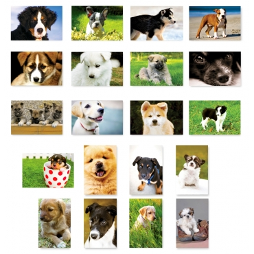 Puppies Set of 20
