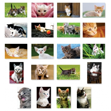 Kittens Set of 20