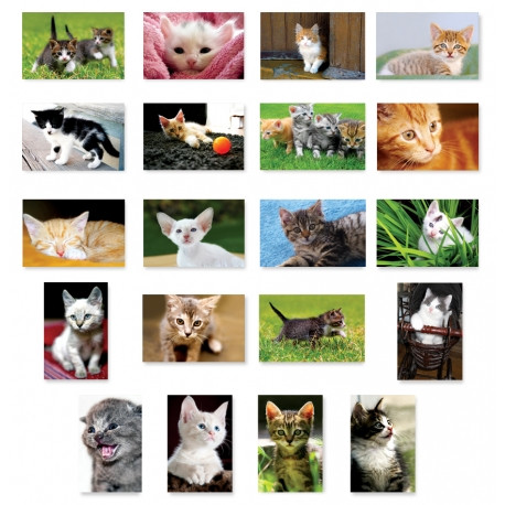 Kittens Set of 20