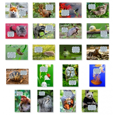 Animal Fun Facts Set of 20