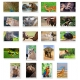 Animals Set of 10