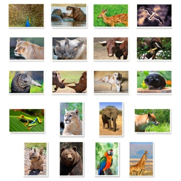 Animals Set of 20