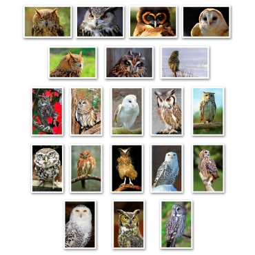 Owls Set of 20