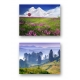 Natural Curiosities Note Cards Set of 10