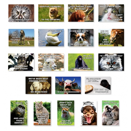 Funny Dogs and Other Animals Set of 20