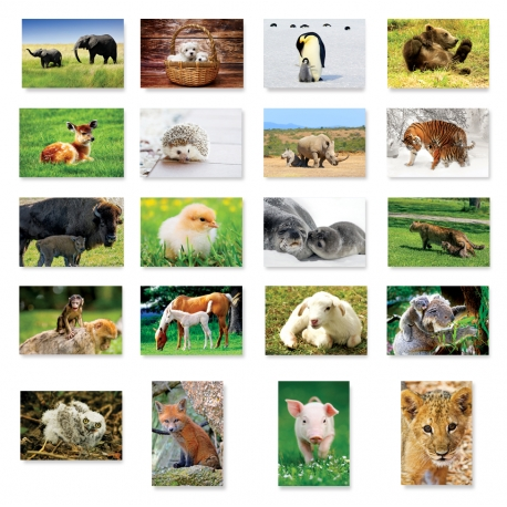 Baby Animals Set of 20