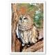 Owls set of 20